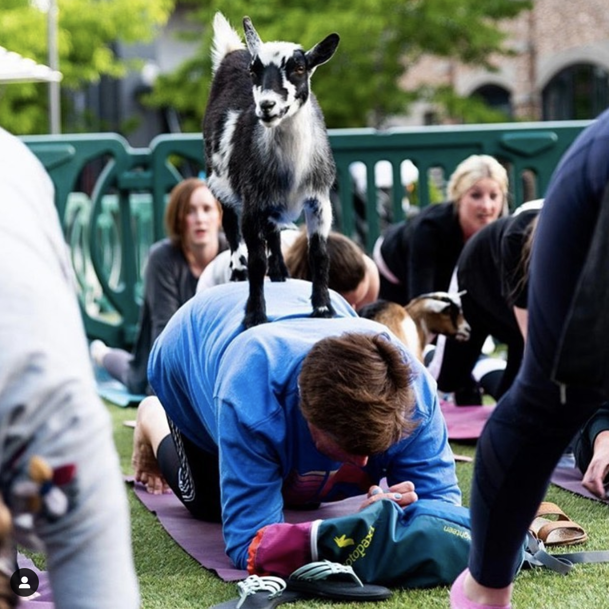 Goat Yoga SLC